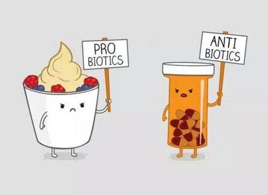 Probiotika tabletter samtidigt med antibiotika penicillin