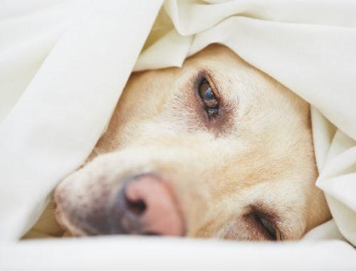 Tips för en bättre sömn