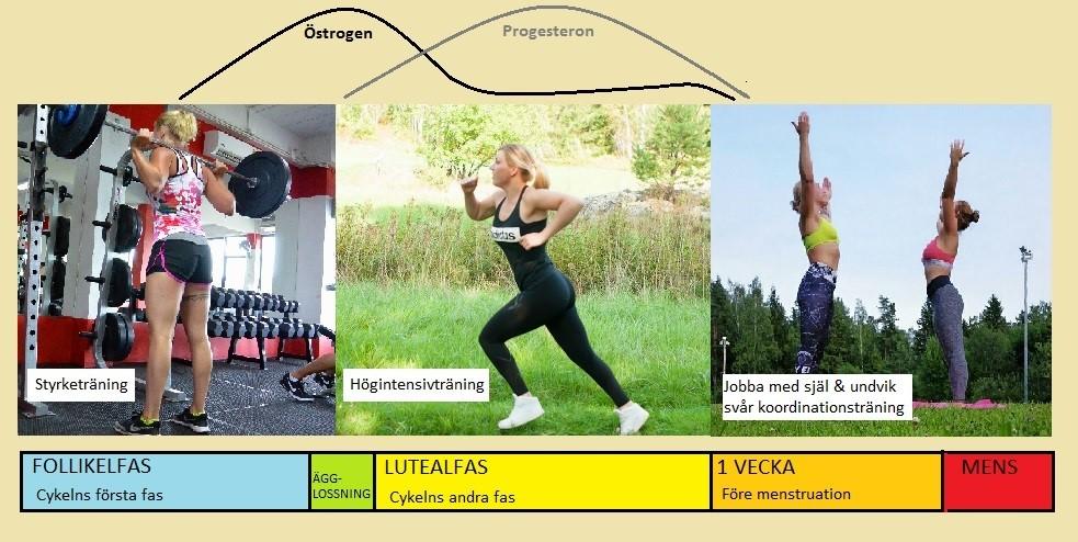 Träna vid mens, träning och mens