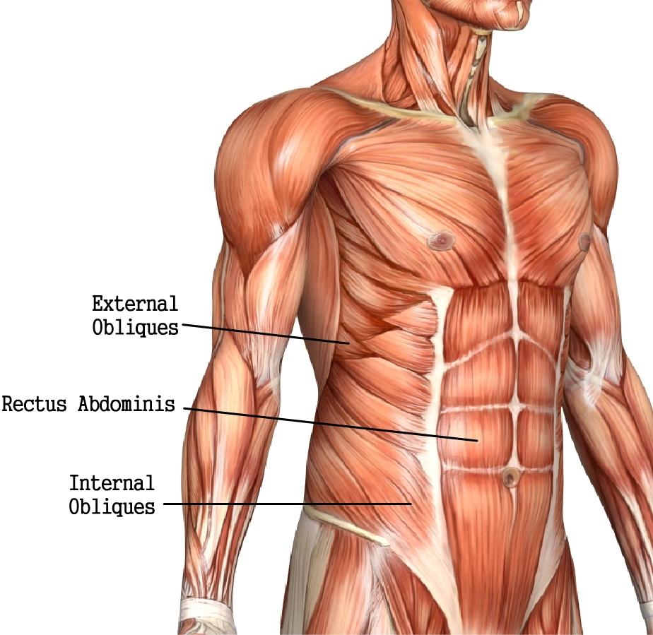 Träna magmuskler obliques rectus abdominis