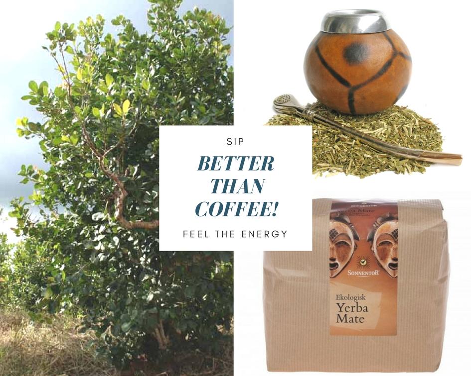 Yerba mate köpa sverige hälsofördelar kaffe