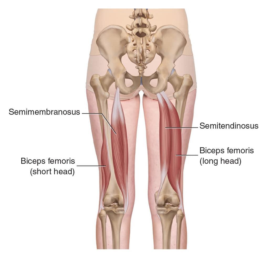 hamstringsmusklerna träna bakre lårmusklerna