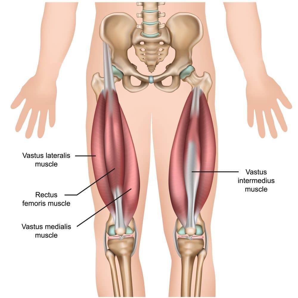 Träna lår - lårmuskeln olika muskeldelar