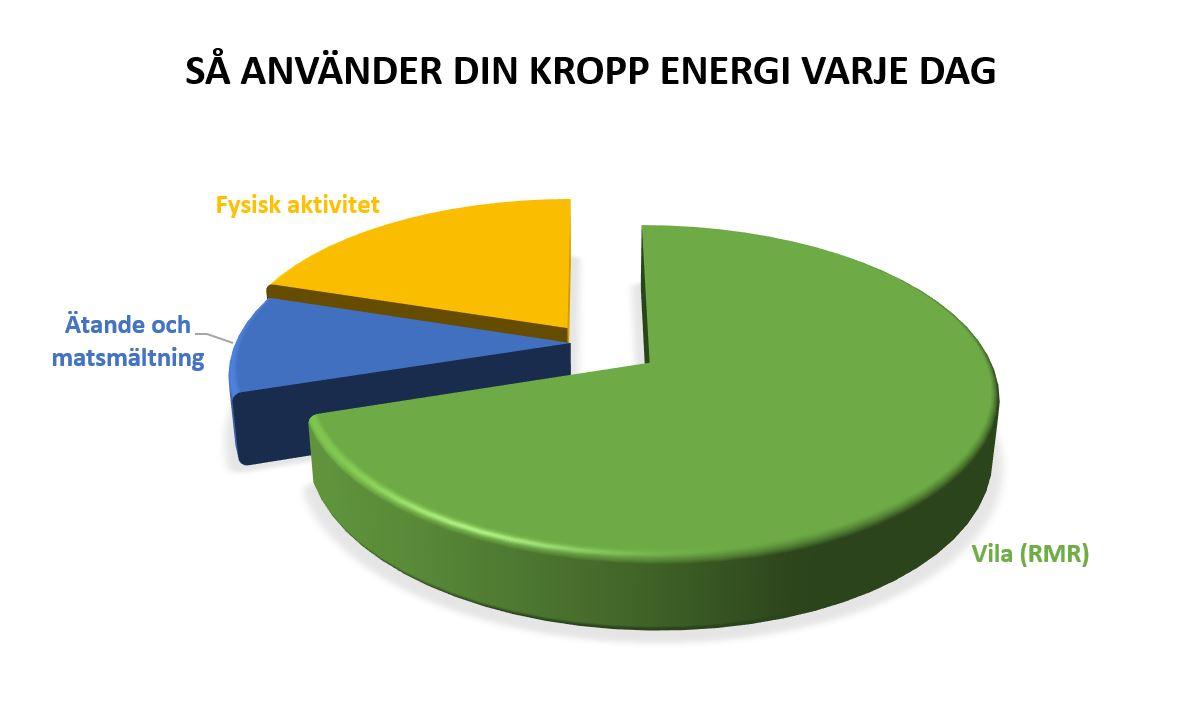 Diagram över hur kroppen förbränner energi genom vila, fysisk aktivitet och matsmältning