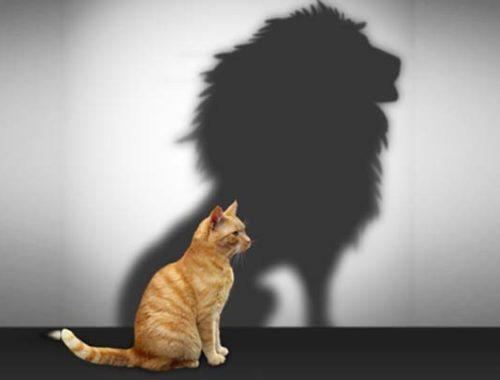 Skillnaden mellan självförtroende och självkänsla självbild ditt eget värde