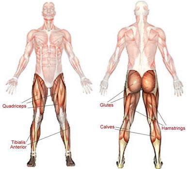 Quadriceps och hamstrings, lårmuskler och baksida lår