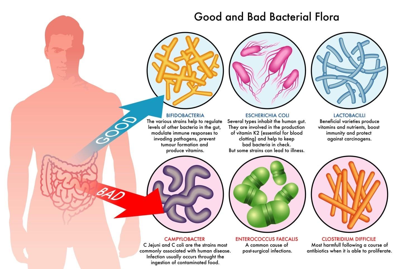 Probiotika bra och dåliga bakterier