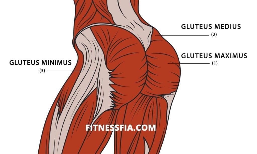 Sätesmusklerna gluteus rumpmuskler träna muskler i rumpan
