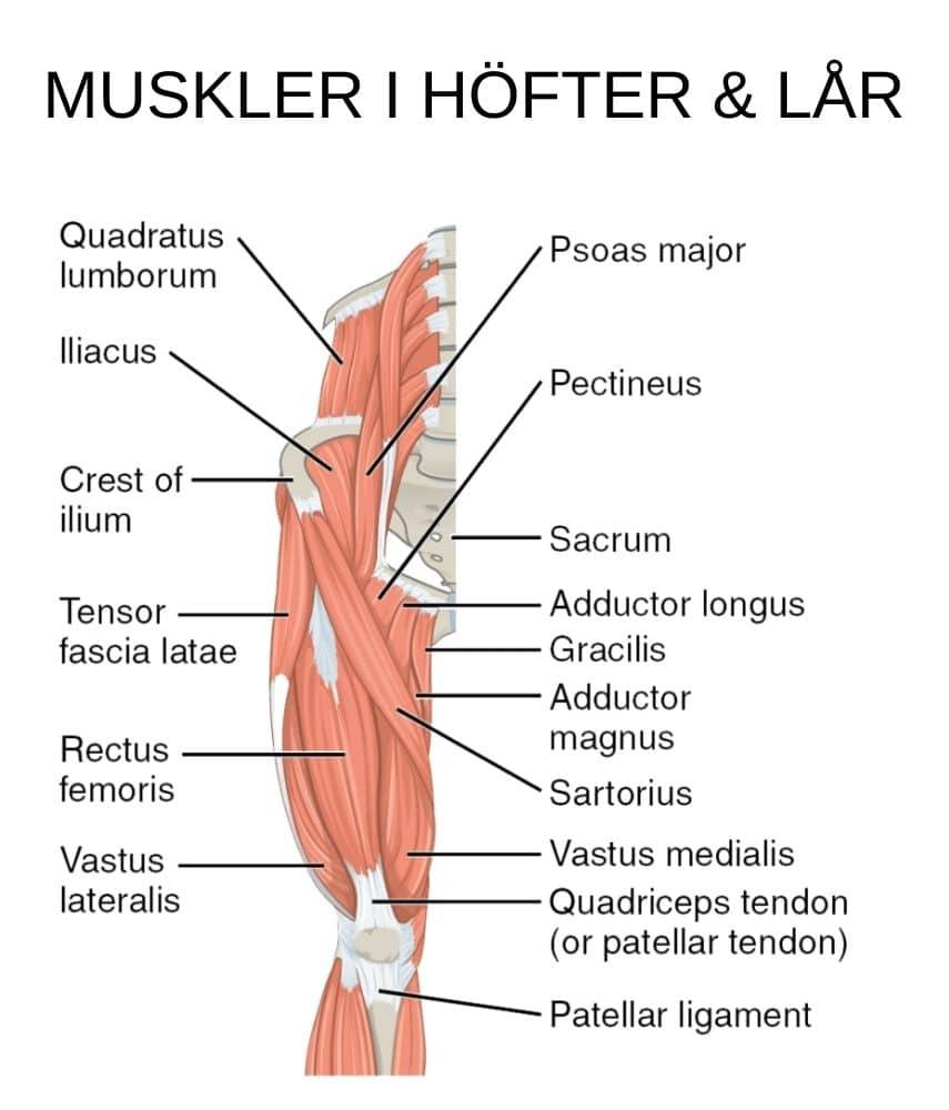 Stretcha höftböjarna muskler
